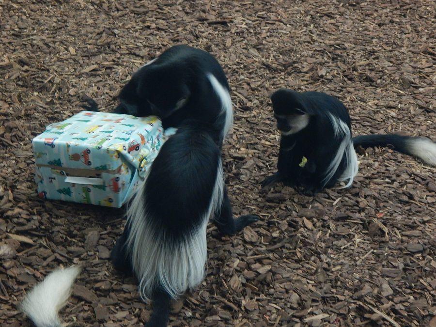 Karácsony az állatkerben