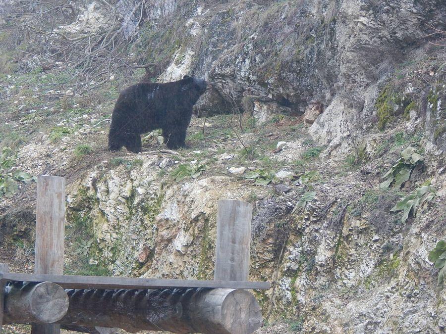 Medve-les