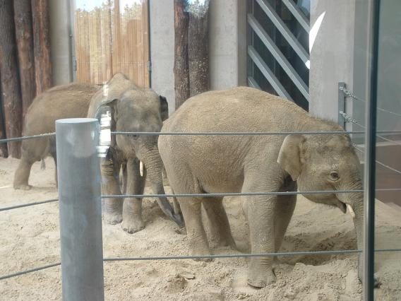 Elefánt Park